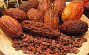 cocoa-bean-exporter-supplier-1