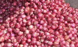 red-onion-exporter-supplier-1