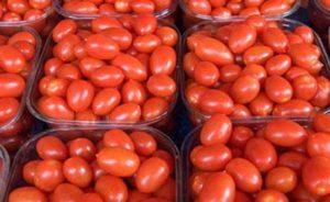 tomato-exporter-supplier-1